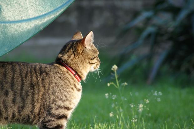Cat Observation