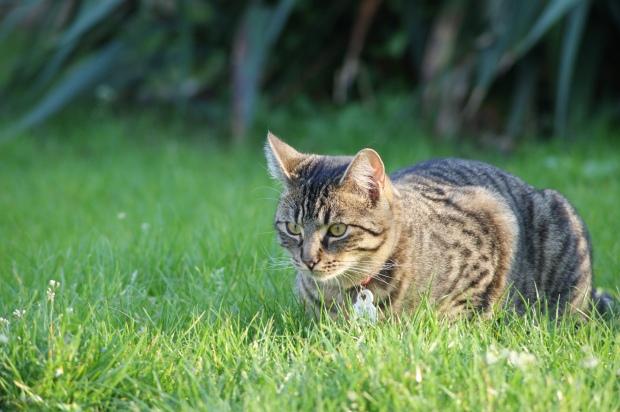 Cat Observation 2